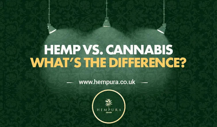 difference-hemp-and-cannabis